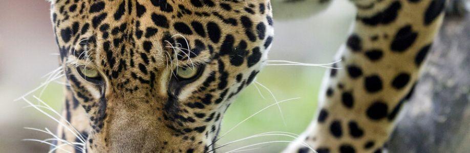 Zvířata Cover Image