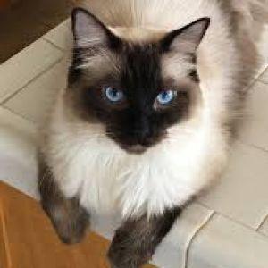 Dominika F Profile Picture